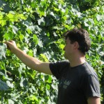 Pier Sfriso checking grapes on the vineyard