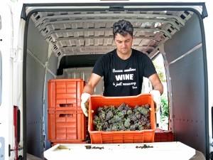 Pier Sfriso unloading grapes