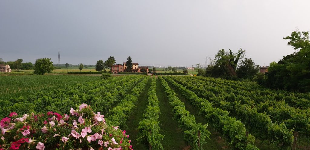View of Sfriso Winery in the summer